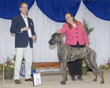Cayenne is reserve winners bitch in her first show