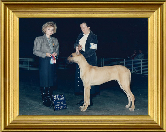 Gemini wins his first show